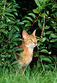 CAT 02 KH0324 01