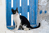 CAT 02 KH0337 01