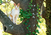 CAT 02 KH0338 01