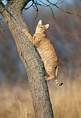 CAT 02 KH0342 01