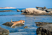 CAT 02 KH0344 01