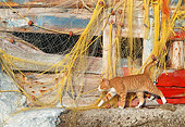CAT 02 KH0346 01