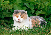 CAT 02 KH0350 01