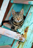 CAT 02 KH0352 01