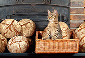 CAT 02 KH0354 01