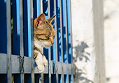 CAT 02 KH0355 01