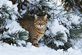 CAT 02 KH0363 01