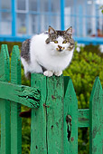 CAT 02 KH0421 01