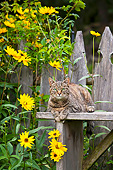 CAT 02 KH0430 01