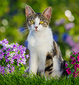 CAT 02 KH0435 01