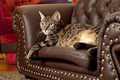 CAT 02 MQ0020 01