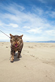 CAT 02 MQ0022 01