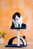 CAT 02 PE0002 01