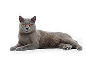 CAT 02 PE0003 01