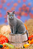 CAT 02 PE0004 01