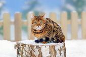 CAT 02 PE0007 01