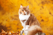 CAT 02 PE0012 01