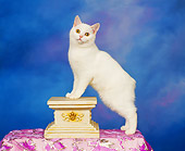 CAT 02 RK0040 01