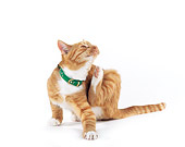 CAT 02 RK0074 02