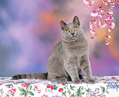 CAT 02 RK0119 01