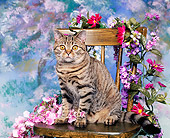 CAT 02 RK0131 02