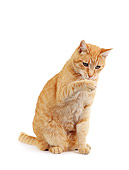 CAT 02 RK0148 01