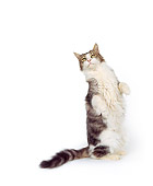 CAT 02 RK0151 02