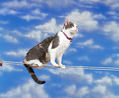 CAT 02 RK0170 05