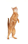 CAT 02 RK0174 05