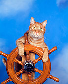 CAT 02 RK0190 05