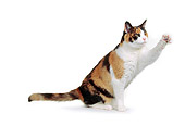 CAT 02 RK0216 02