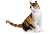 CAT 02 RK0217 02