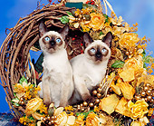 CAT 02 RK0417 02