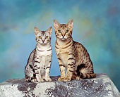 CAT 02 RK0455 11
