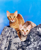 CAT 02 RK0460 06