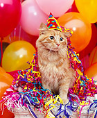 CAT 02 RK0485 03