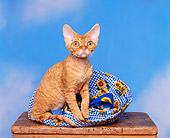 CAT 02 RK0508 04