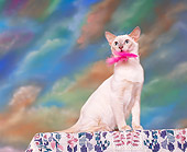 CAT 02 RK0518 01