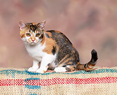 CAT 02 RK0525 12