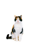 CAT 02 RK0545 03