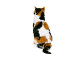 CAT 02 RK0549 07