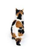 CAT 02 RK0553 04