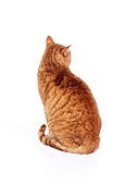CAT 02 RK0559 12