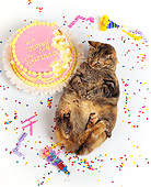 CAT 02 RK0579 26