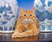 CAT 02 RK0716 03