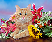 CAT 02 RK0717 02