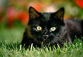CAT 02 RK0767 05