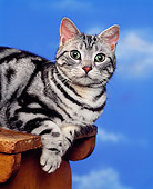 CAT 02 RK0795 01