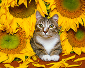 CAT 02 RK0812 16