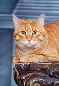 CAT 02 RK0816 24